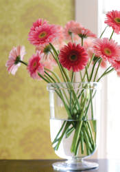Meadowshall from Damask Resource 3 Collection