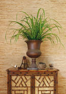 Thibaut Design Colony Raffia in Grasscloth Resource 2