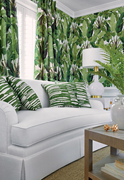 Travelers Palm from Tropics Collection